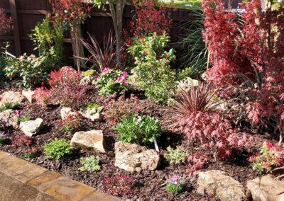 Beautiful garden planted with Italian & Dutch specimen plants 10