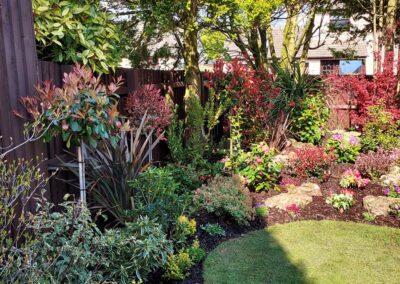 Beautiful garden planted with Italian & Dutch specimen plants 3