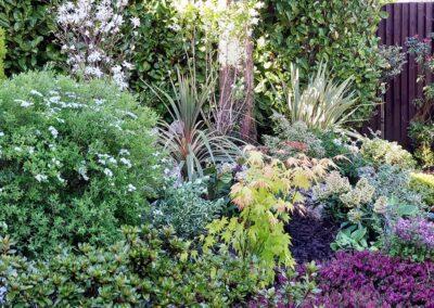 Beautiful garden planted with Italian & Dutch specimen plants 5