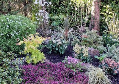 Beautiful garden planted with Italian & Dutch specimen plants 9